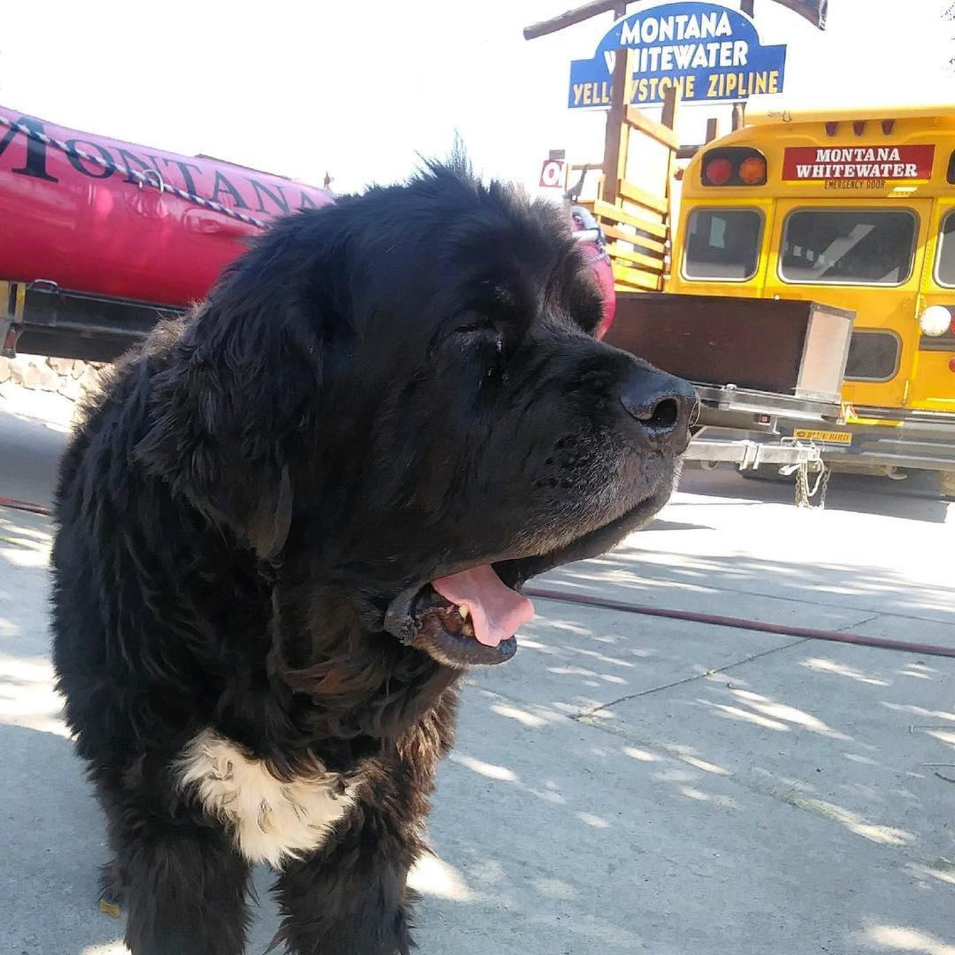 Go tubing with your dog near Yellowstone National Park in Montana.