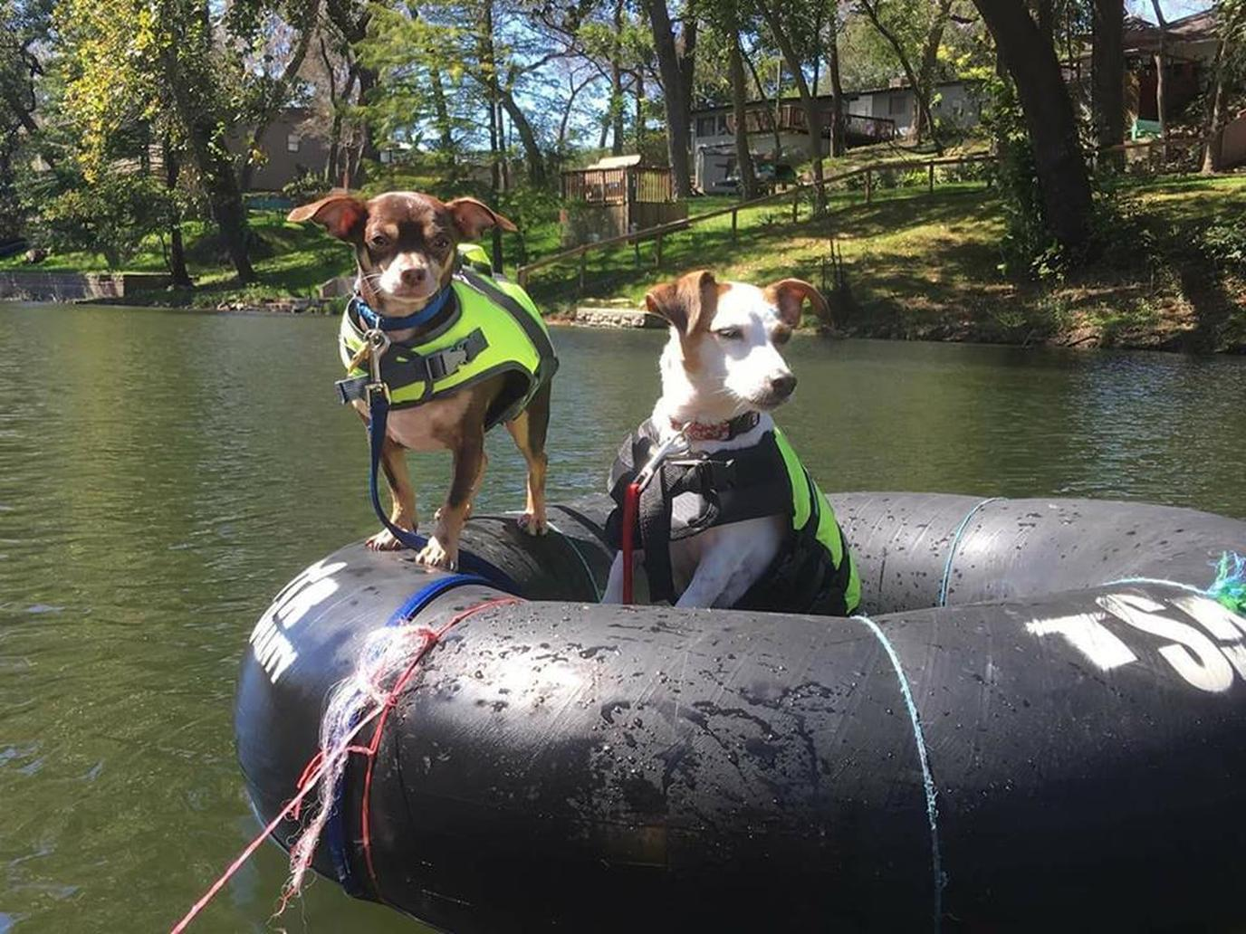 Tube the Guadalupe River in Texas with your dog with Shanty Tubes.