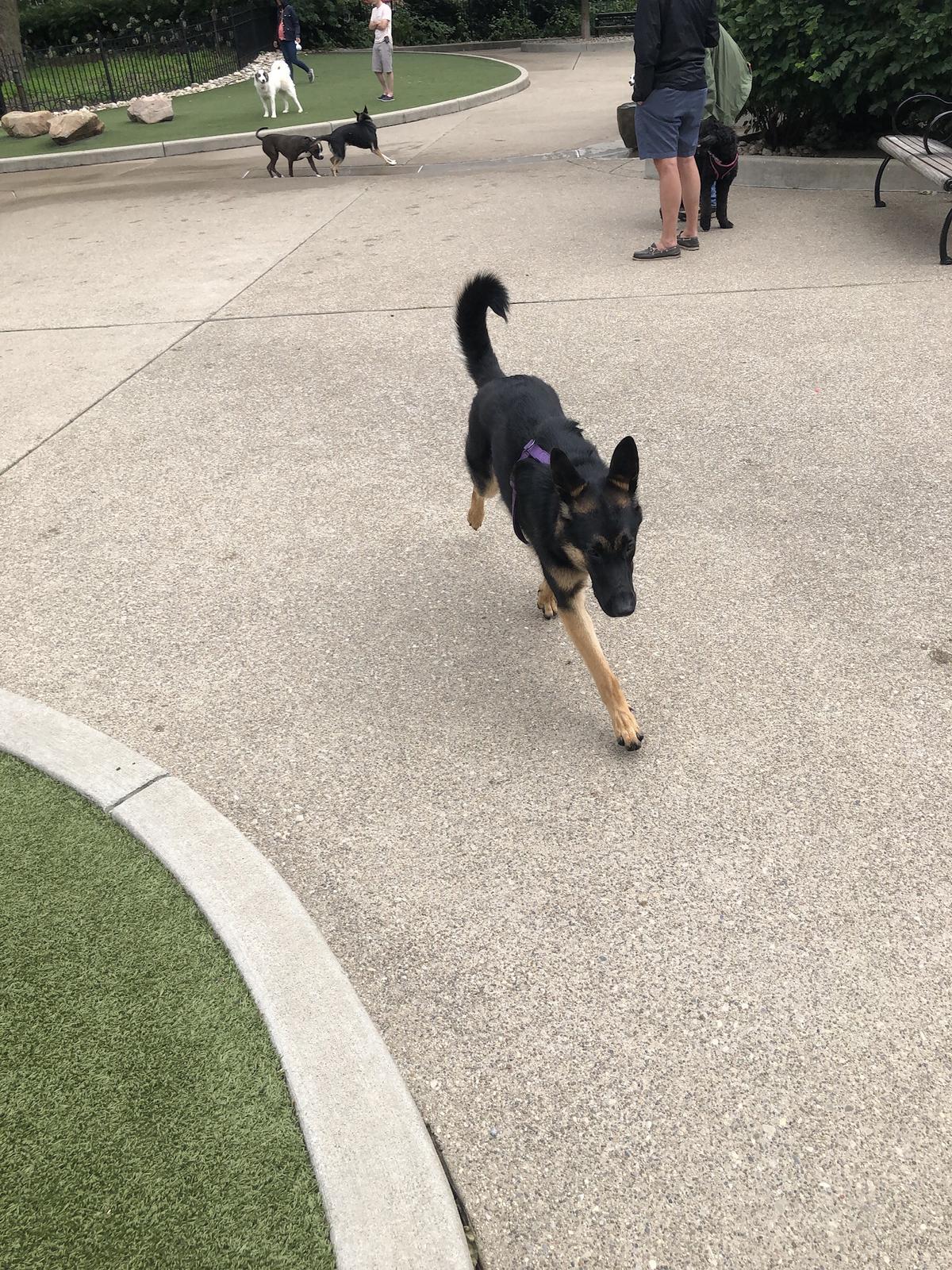 Coco Playing At Washington Park