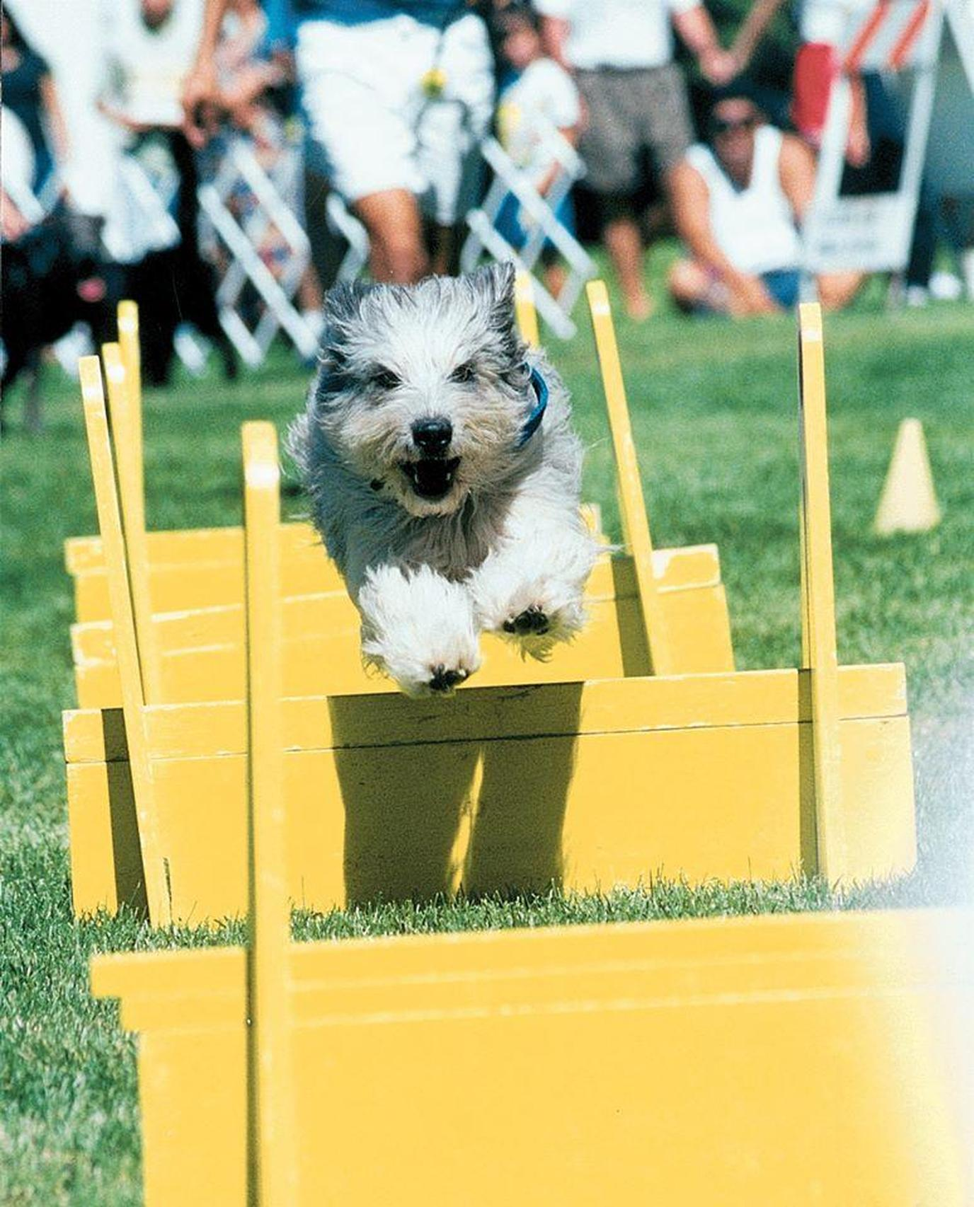 The largest dog festival in the U.S., Bark in the Park will be full of demonstrations and activities