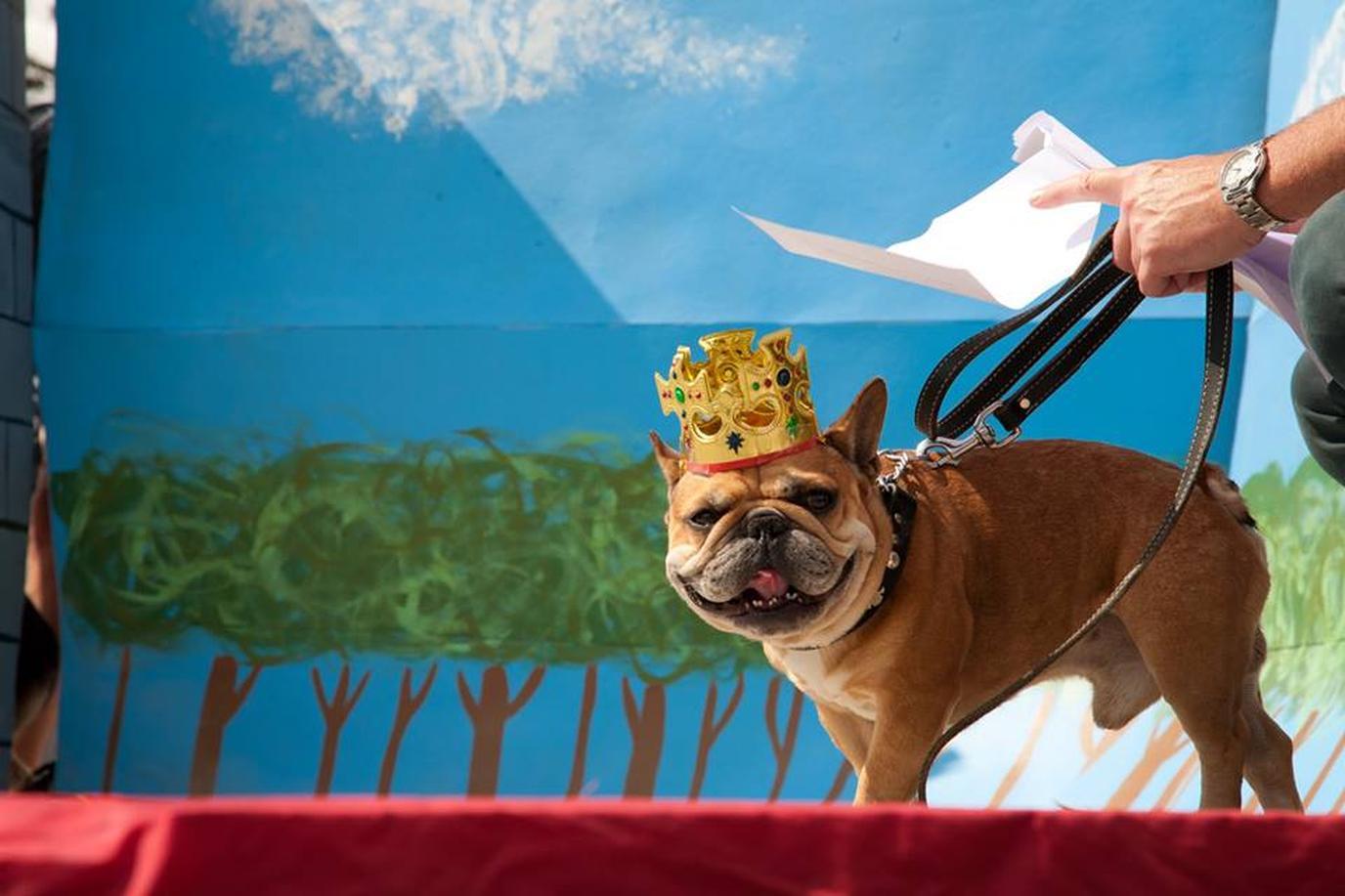 Don't miss the SomDogFest aka the Somerville Dog Festival this September.
