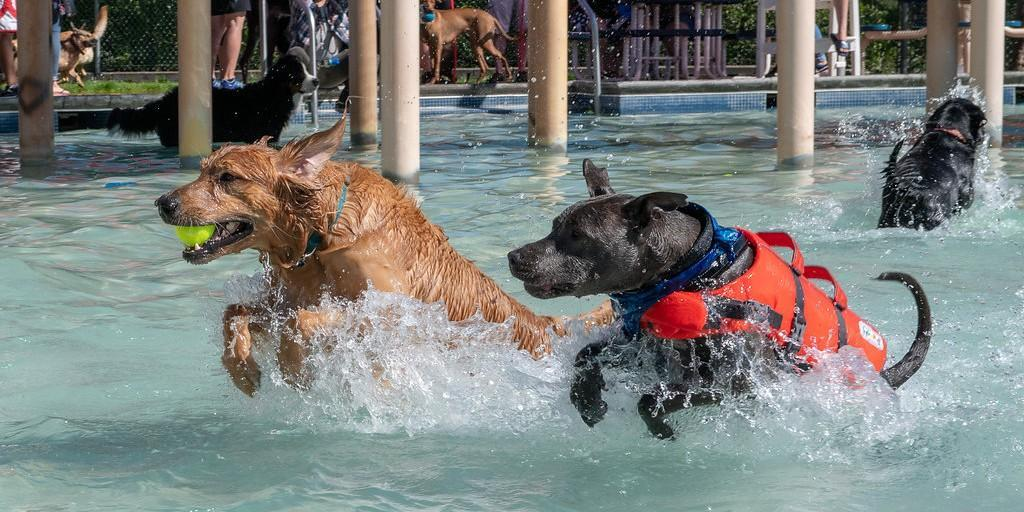 September 2019 is packed full of fun dog-friendly events.