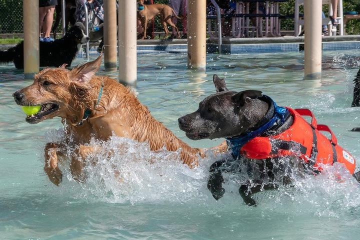 Check out these dog-friendly events in September 2019.