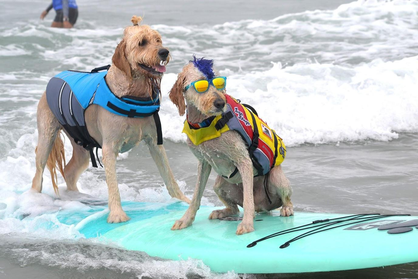 Helen Woodward Animal Center and SoCal Surf Dogs offer dog surf lessons before the Surf-A-Thon event