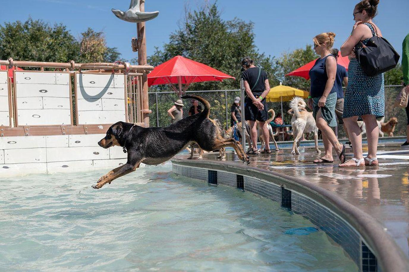 The 12th Annual Doggie Plunge benefits Freedom Service Dogs of America.