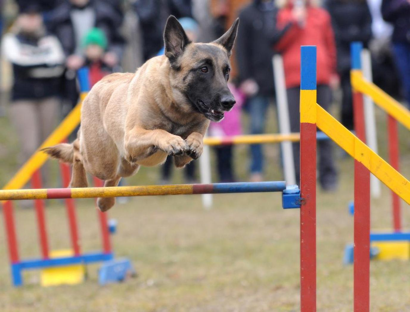 Dogs Unleashed race event includes agility courses, flyball, obedience competition and more.