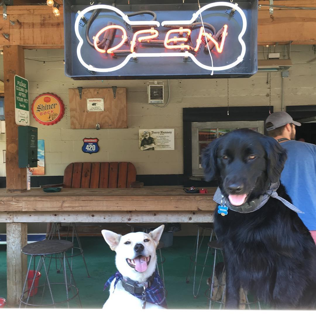Dogs are welcome inside and outdoors at The Dog Bar in Charlotte.
