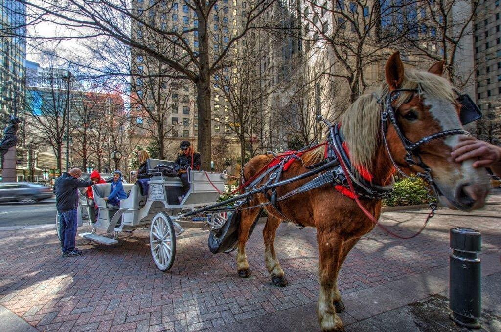 Take a carriage ride through Charlotte with your dog.