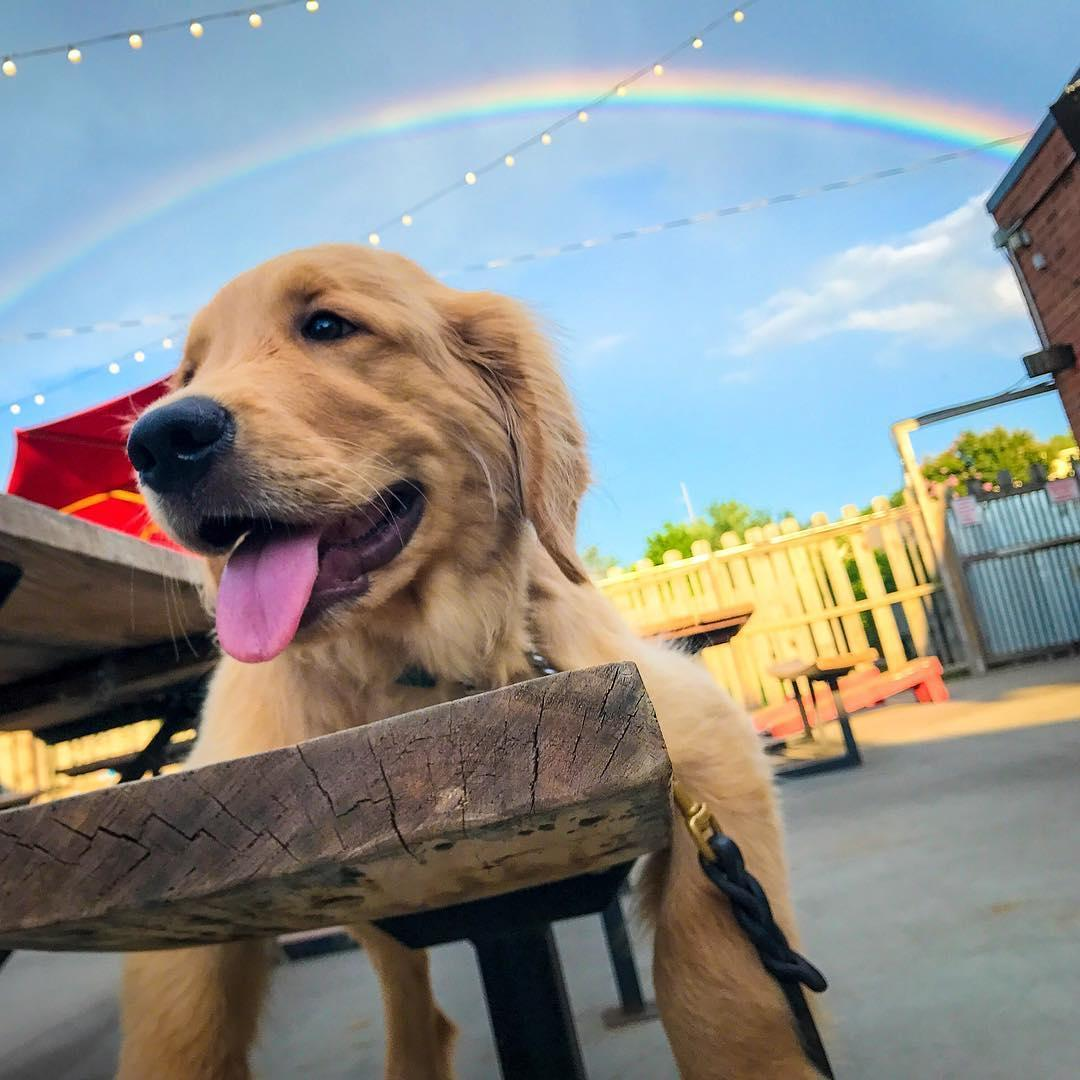VGBG Beer Hall & Garden is the home of Charlotte's largest dog-friendly patio.