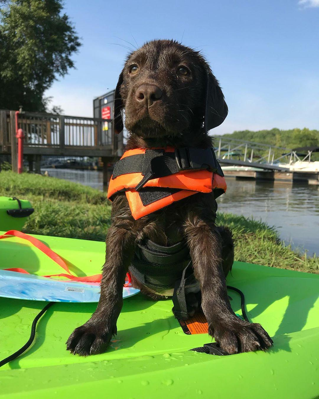 Spend the day at the pet-friendly U.S. National Whitewater Center along the Catawba River.