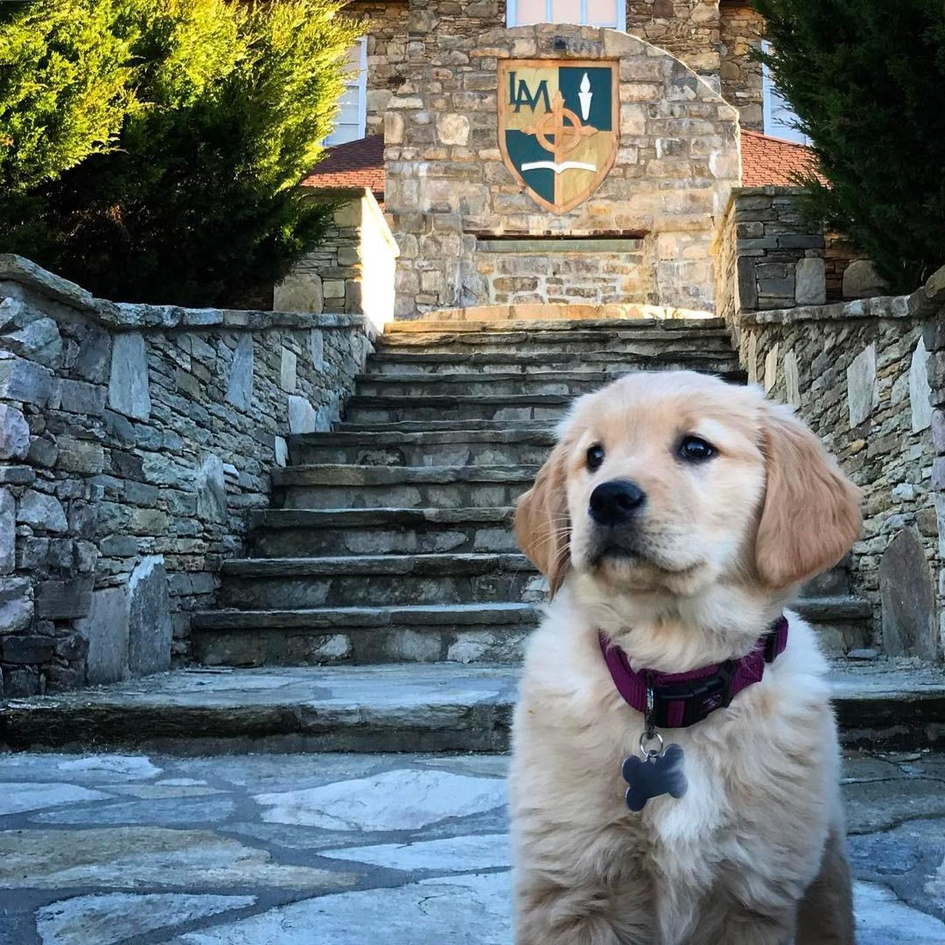 Lees-McRae College is a pet-friendly college in North Carolina.