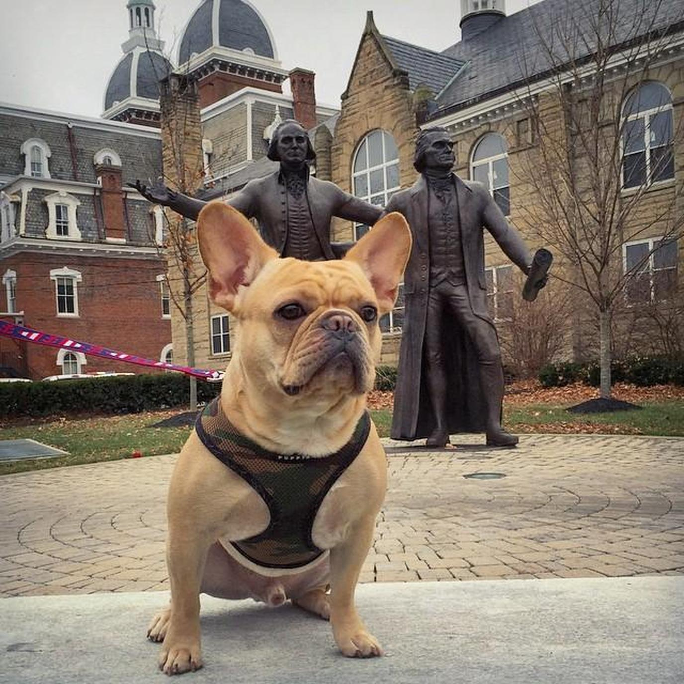 WJU is a pet-friendly college in Pennsylvania .