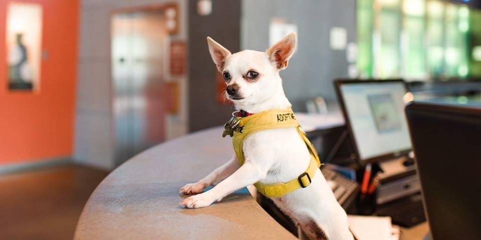 Read all about the Aloft pet policy.