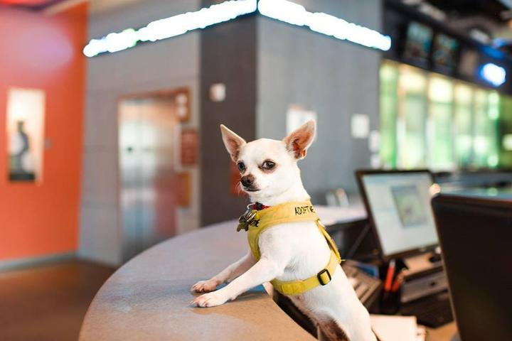 The Aloft pet policy welcomes furry friends for no additional fee!