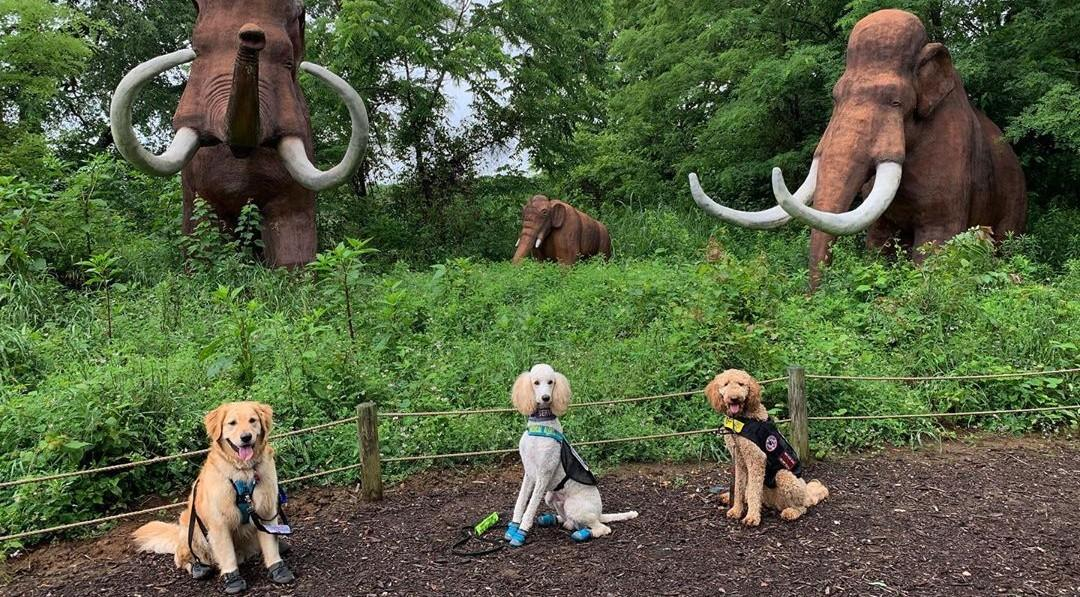 These 8 amusement parks around the world welcome dogs for free.