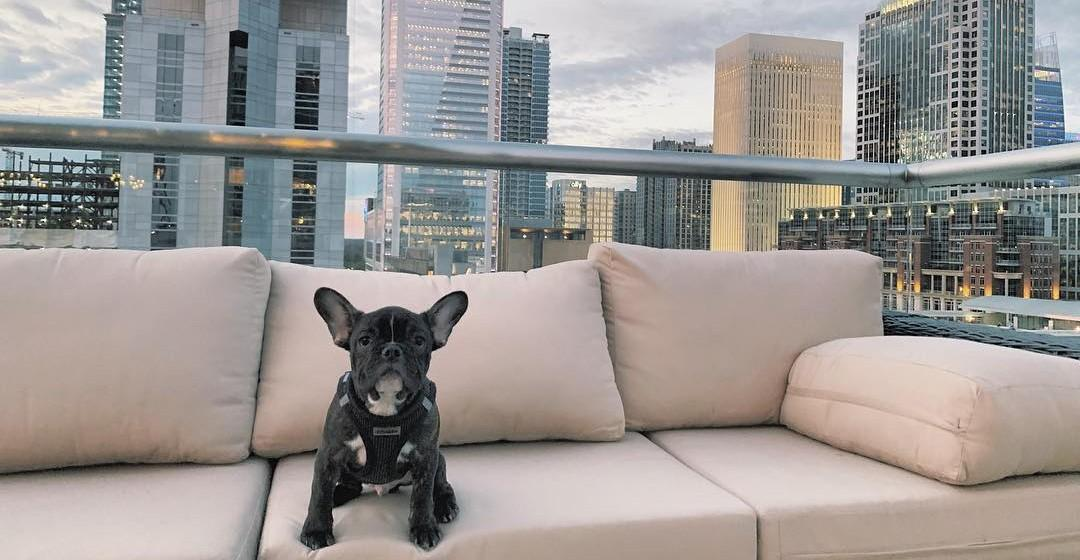 Spend a weekend in dog-friendly Charlotte, NC!