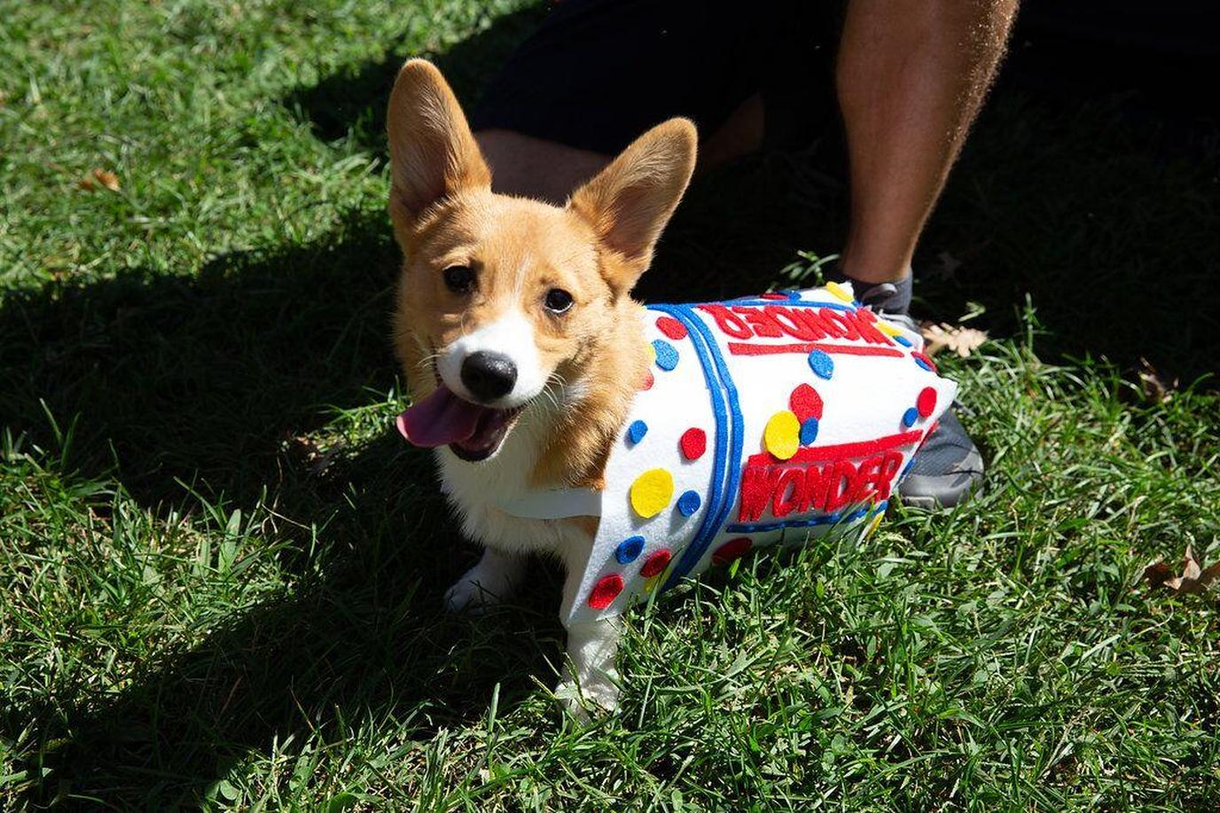Come to Nashville for the 30th Annual Dog Day Festival, the city's longest-running dog festival.