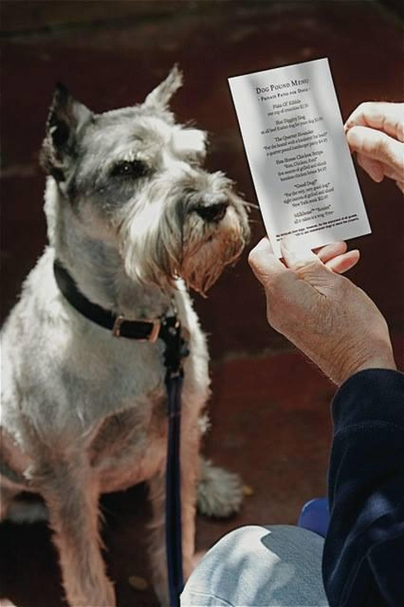 The Forge in the Forest is known for its pet friendliness and excellent dog menus!