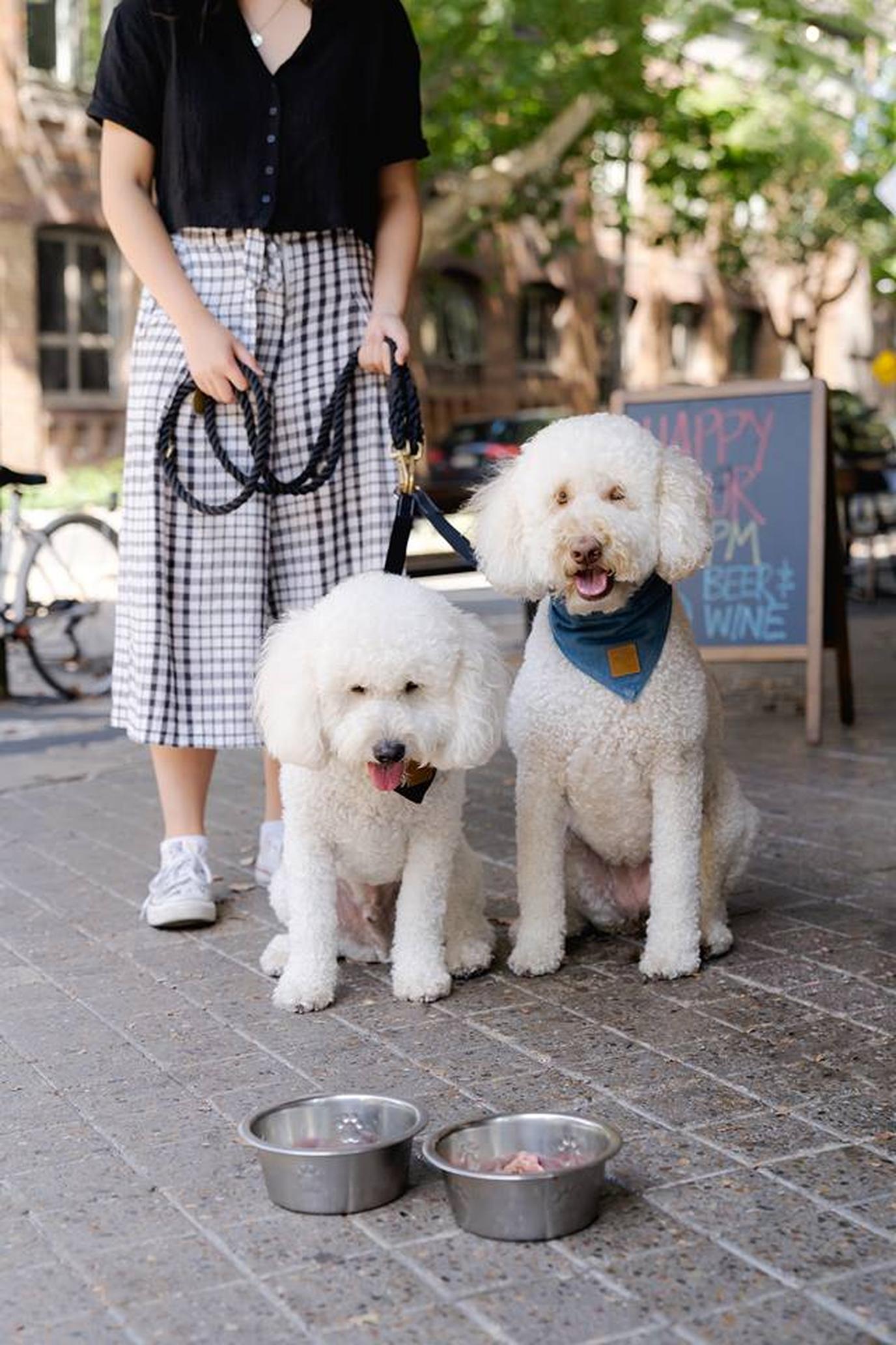 The Carrington's dog menu includes beef tartare, a pup fave.