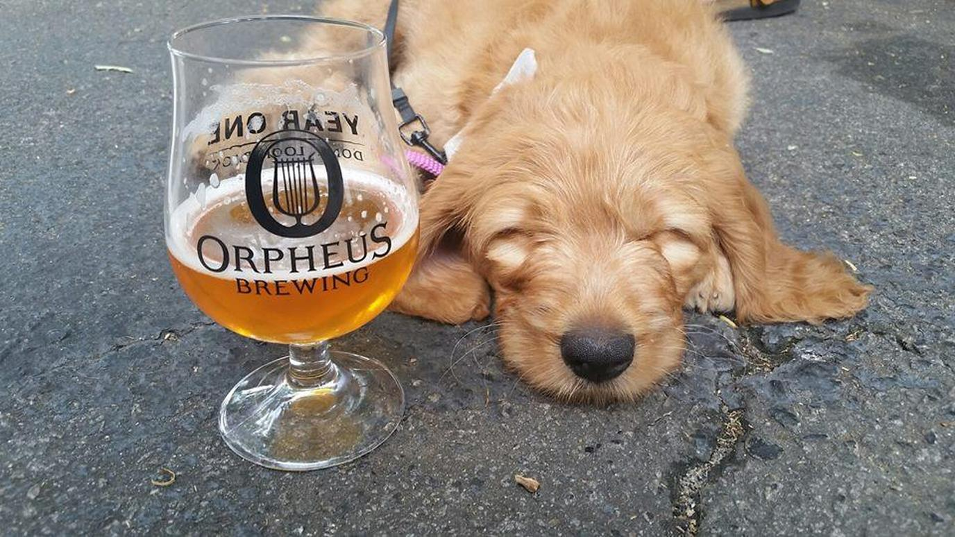 Orpheus Brewing is hosting a National Dog Day Happy Hour to benefit the Atlanta Humane Society.