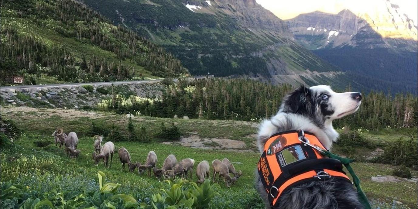 National Parks are a great option for exploring the outdoors with your dog.