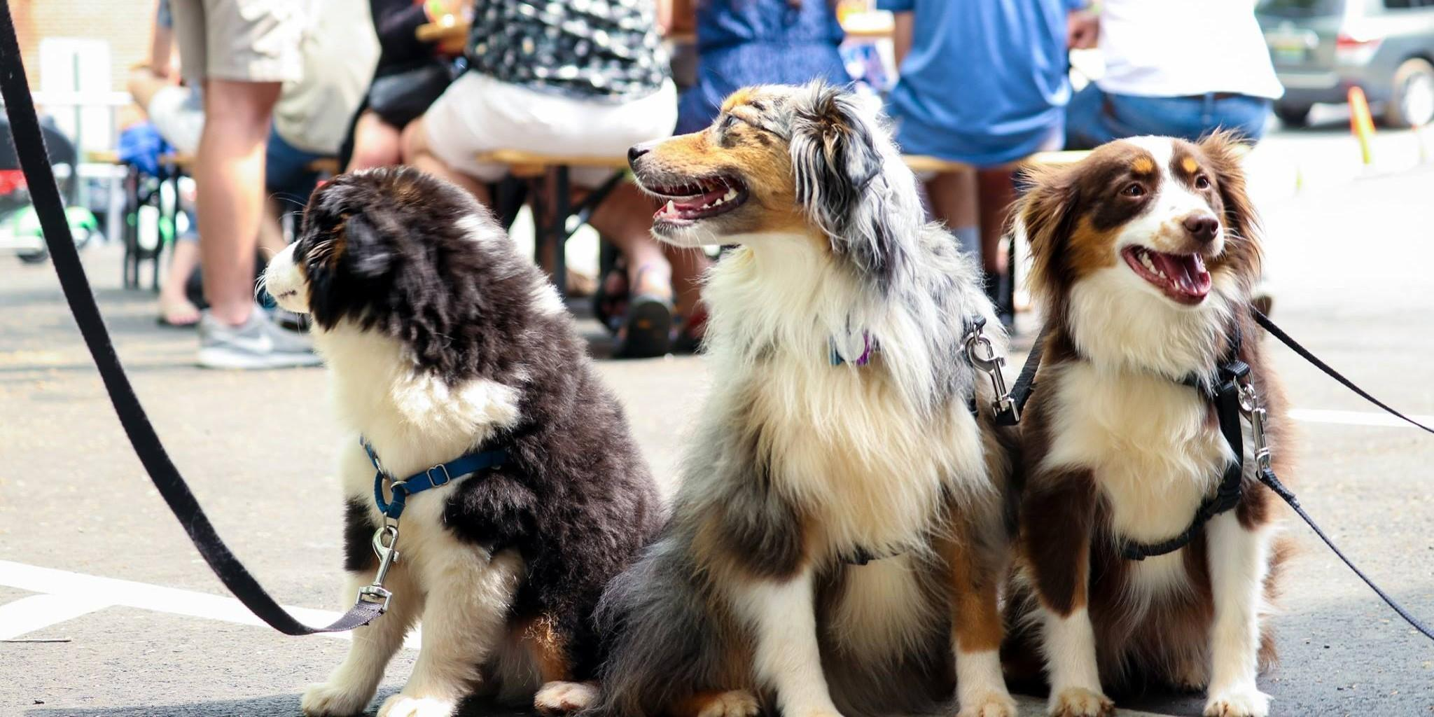 Check out these 10 National Dog Day events you can attend with your dog.
