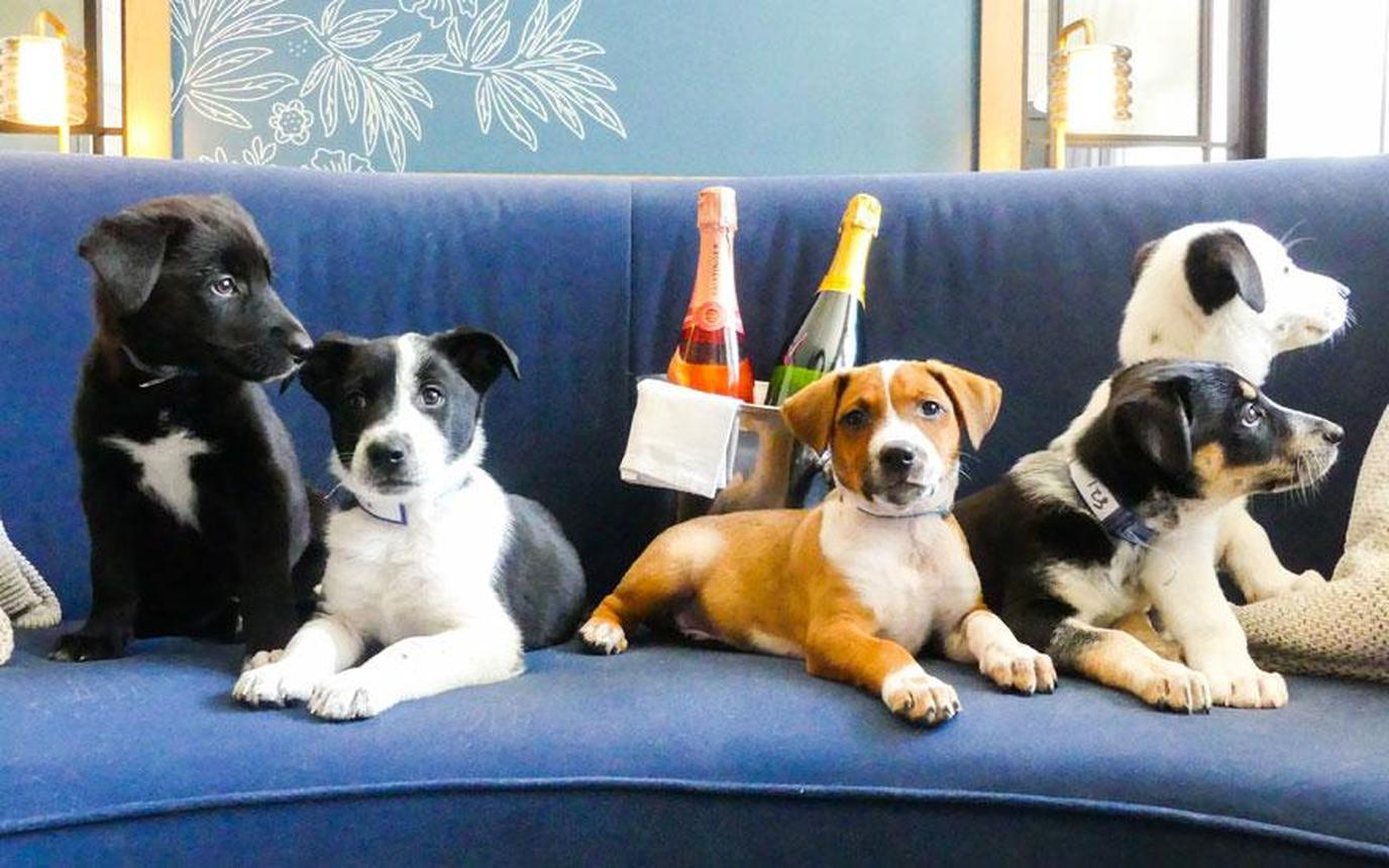 Enjoy puppies and prosecco at the Kimpton Hotel Monaco Denver on National Dog Day.