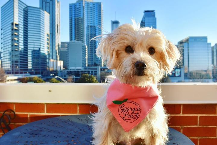 Spend a weekend in dog-friendly Atlanta, Georgia!