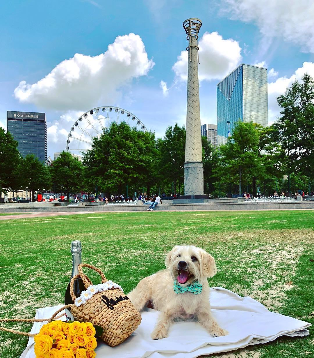 Stroll to Centennial Olympic Park for a dog-friendly walking tour of the 22-acre urban greenspace.