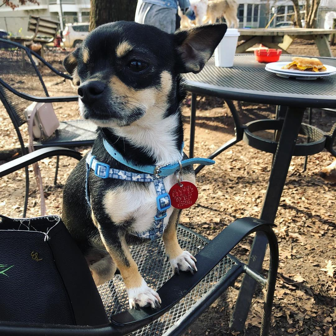 Dog-friendly ParkGrounds in Atlanta serves espresso drinks, craft beers, wine and cocktails.