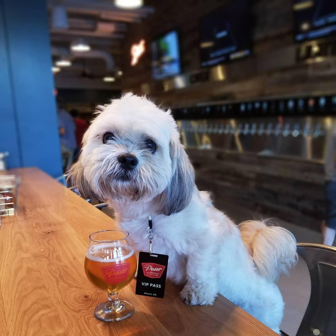 Dogs are welcome inside Pour Taproom in Atlanta.