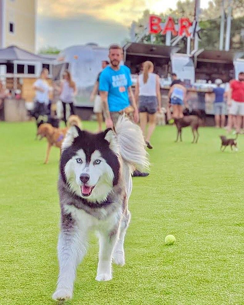 Fetch Park and Ice House in Atlanta is a dog park with attached bar and restaurant.