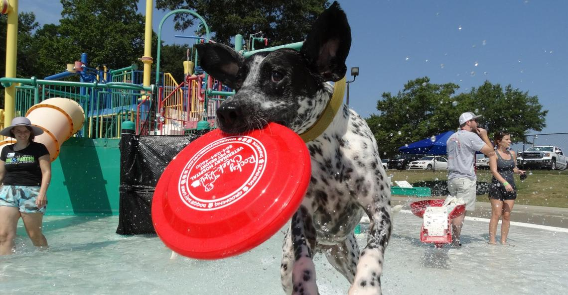 Dogs and their owners are invited to play together at select Splash Days across the country.