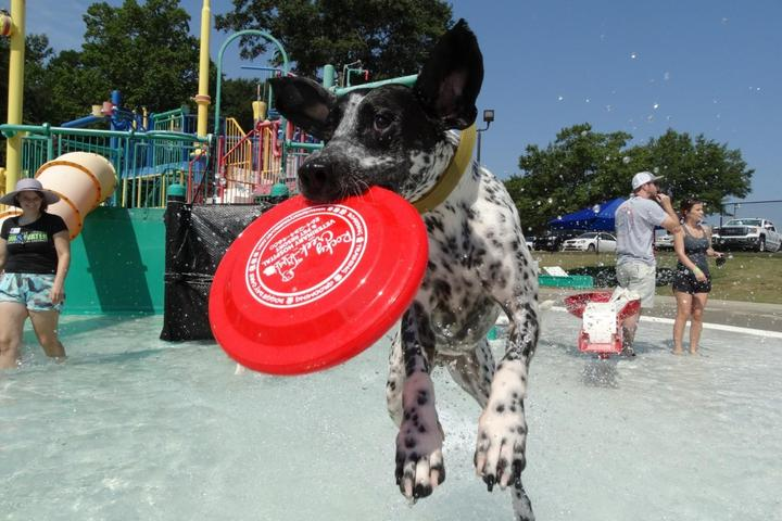 At the close of the summer swim season, dogs are invited to play at these pool parties.