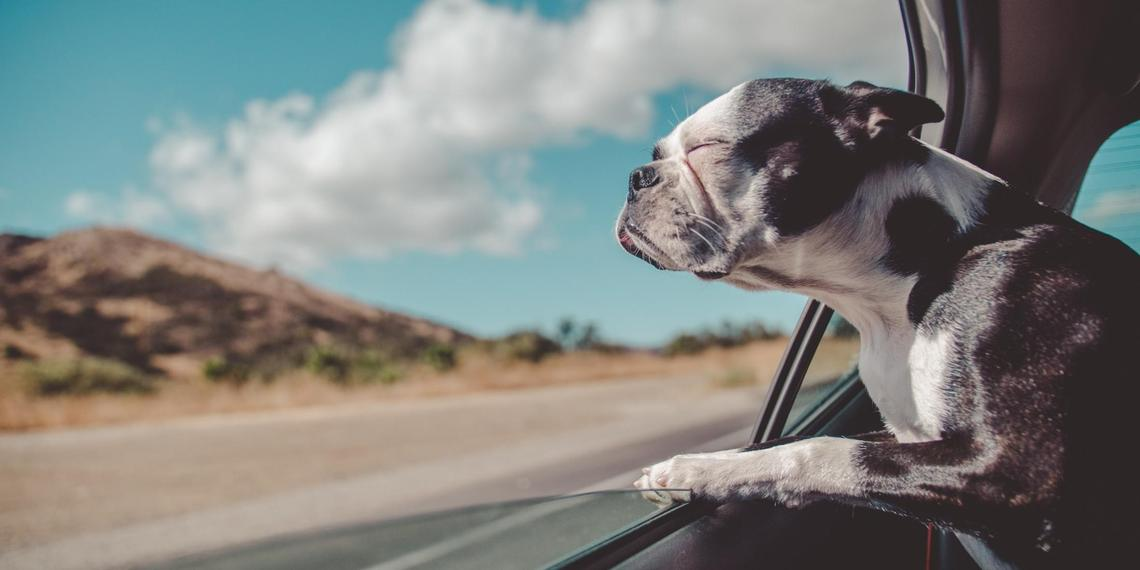 Pet-Friendly Small Towns Worth the Road Trip
