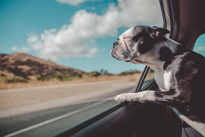 Bring Fido on a road trip to these dog-friendly small towns.