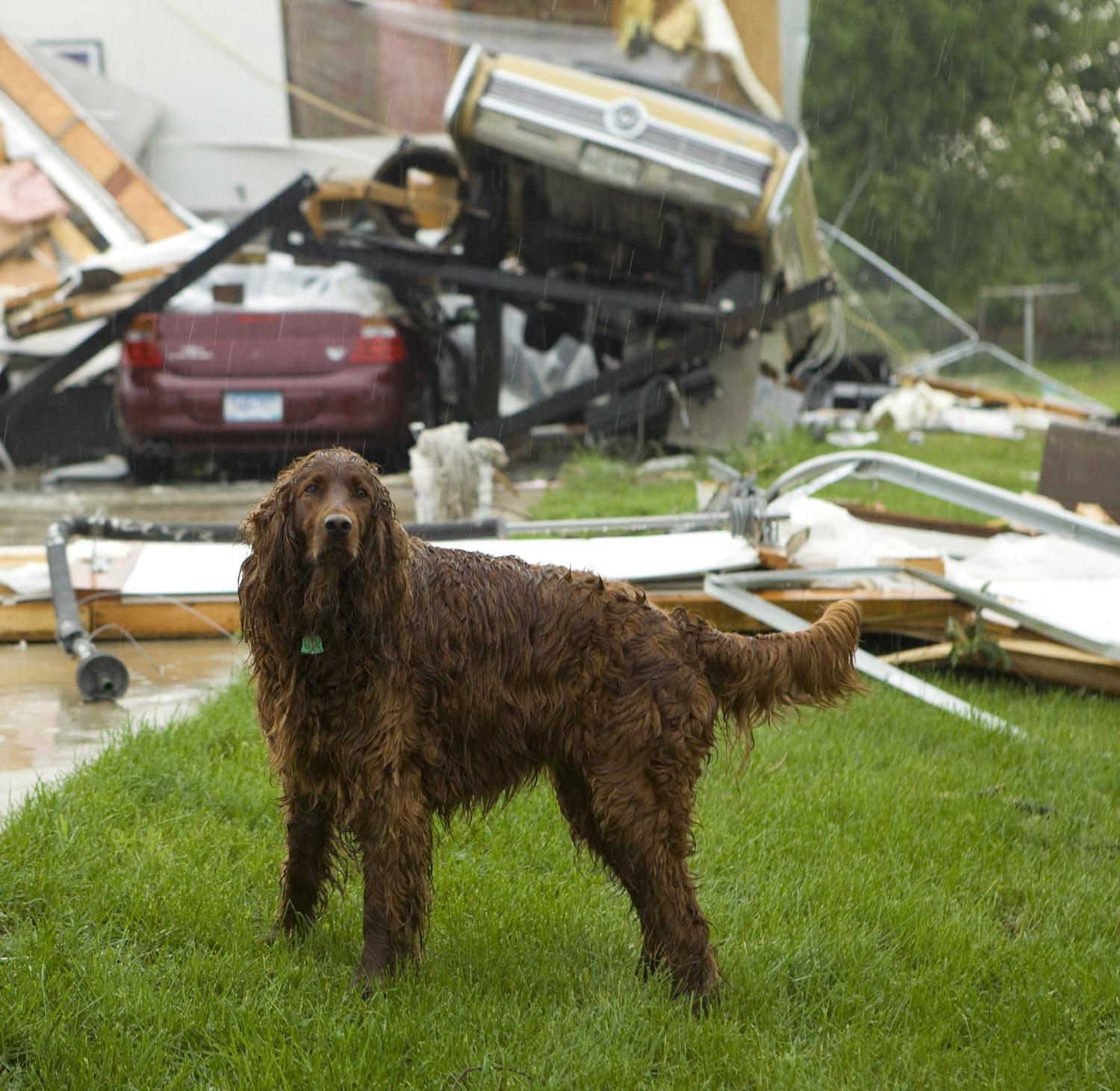 How to Keep Your Dog Safe During a Tornado - Bring Fido