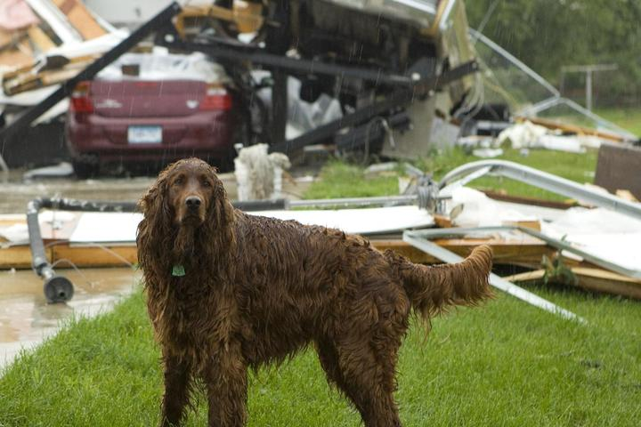 How to Keep Your Dog Safe During a Tornado.