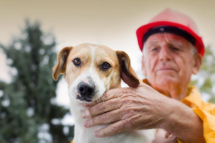 How to Keep Your Dog Safe During a Wildfire.