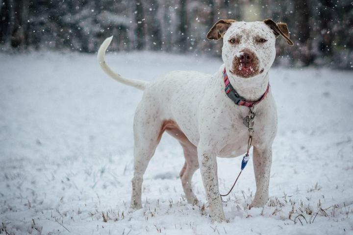 How to Keep Your Dog Safe During a Winter Storm.