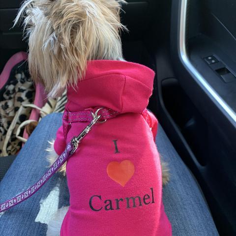 Dog Friendly Bed And Breakfast Carmel Ca