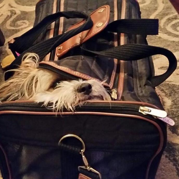 Tricks for flying with dogs from a flight attendant.