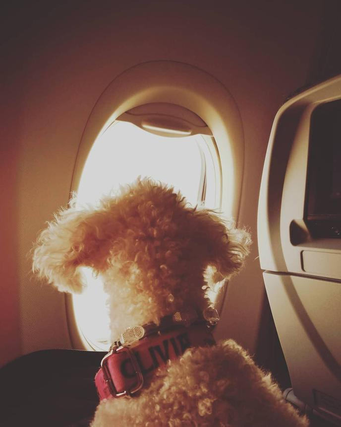 Airline attendants share tips for flying with dogs.
