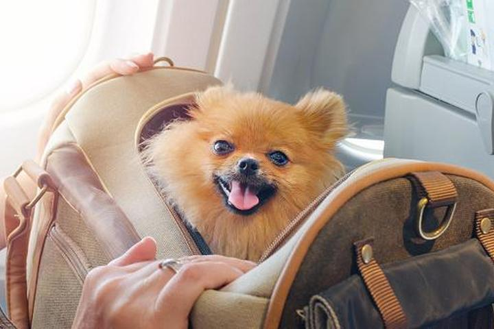 9 Trusted Tips from Flight Attendants for Flying with Dogs