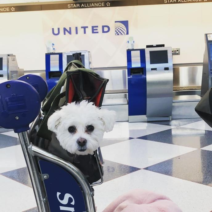 Flying with Fido on airplanes can be less stressful if you follow these tips from flight attendants.