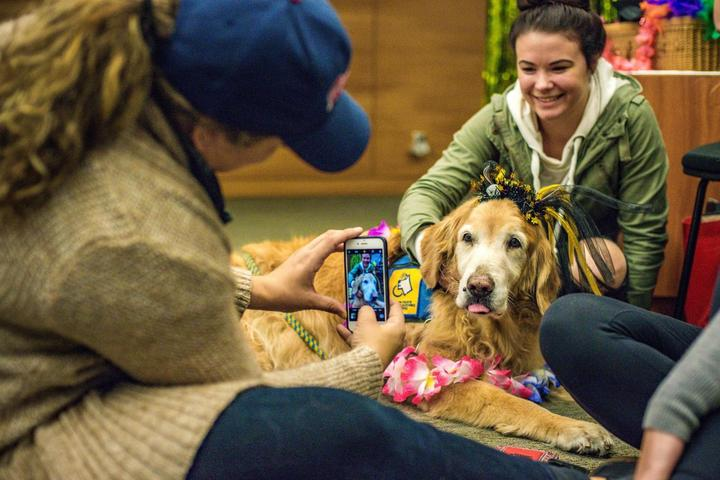 Understanding the difference between a service dog, support dog, and therapy dog.