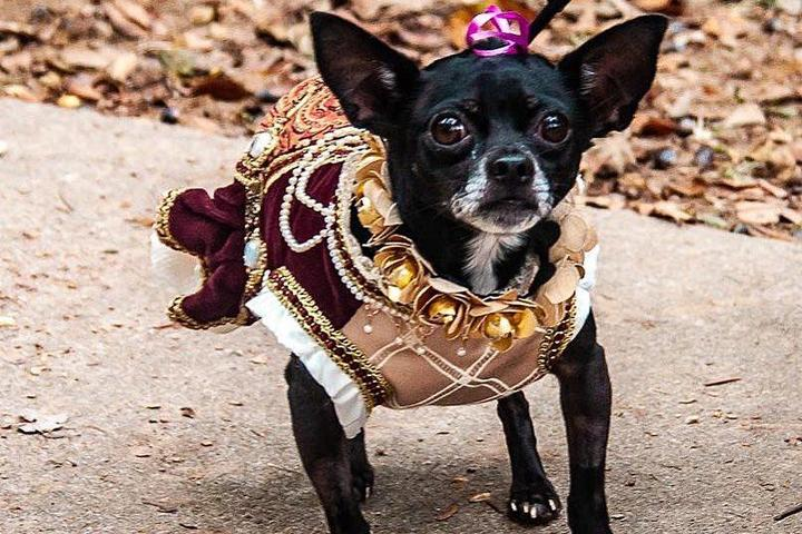 The pet-friendly St. Louis Renaissance Festival includes dog races and more.