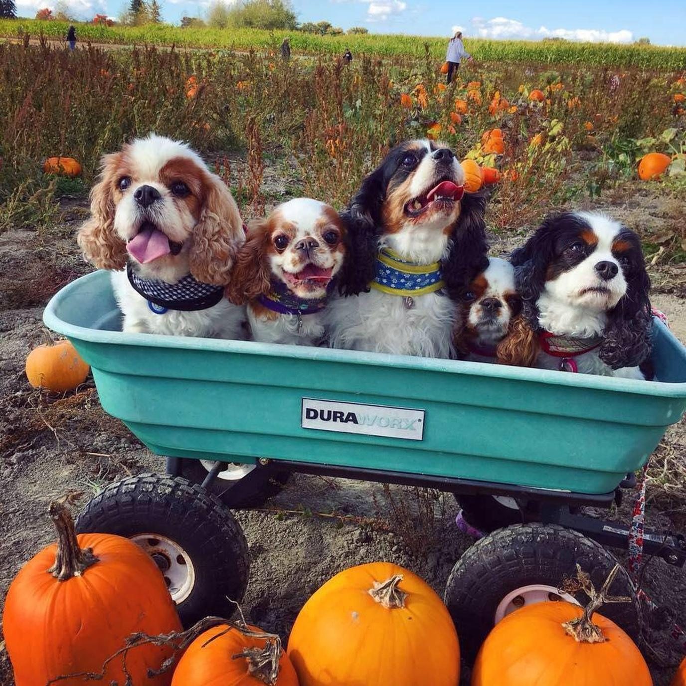 Celebrate Fall With Fido! - cover