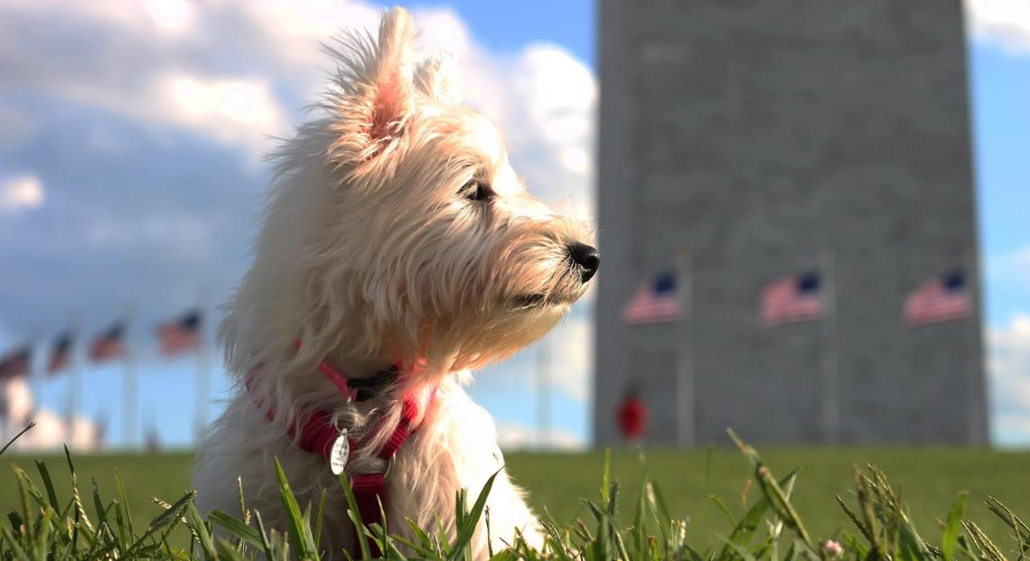 A dog sits in the grass at the pet-friendly Washington Monument.