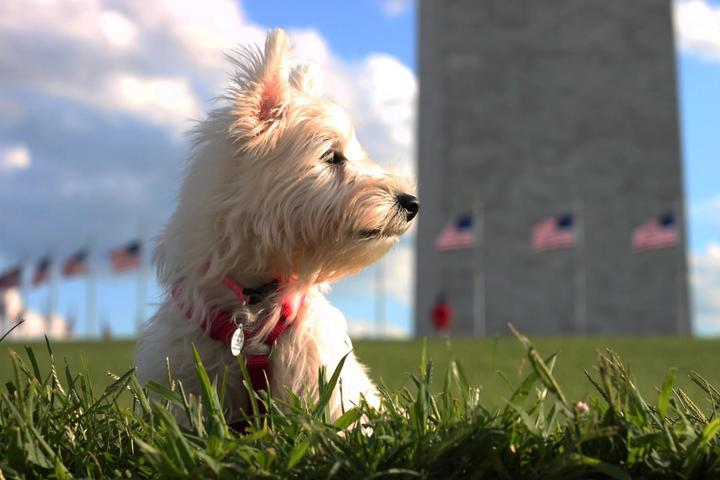 A Dog Sits in Grass at the Pet-Friendly Washington Monument.
